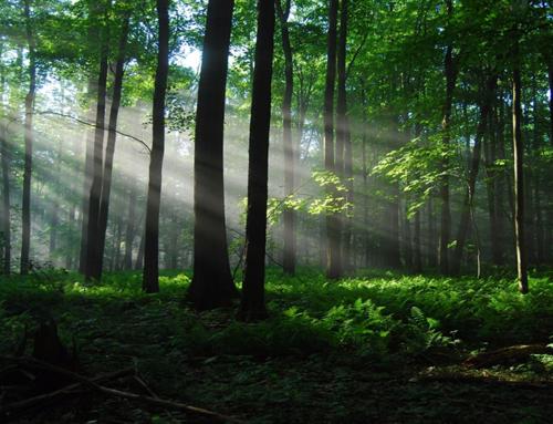 Il legno, una risorsa inesauribile per l'edilizia secondo il Consorzio HOOOME